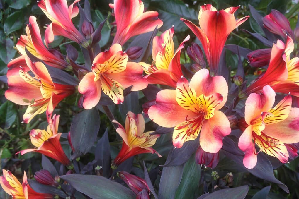 Close up of flowers in the motel garden